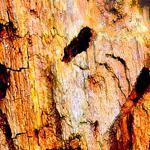 Живописный феномен природы